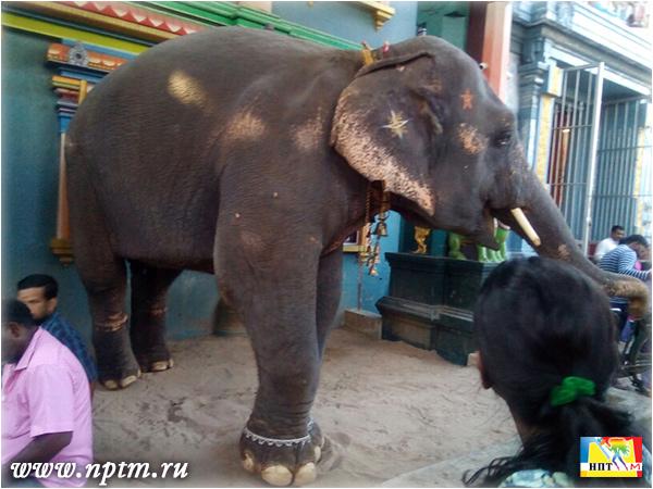 Мария Карпинская в Храме Ганеши - Манакула Винаягар. Индия, Пондичерри 2018.