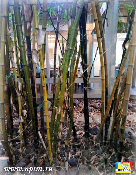 Мария Карпинская в индийском городе Пондичерри не далеко от ашрама Шри Ауробиндо. Южная Индия, Штат Тамил Наду. 2018.