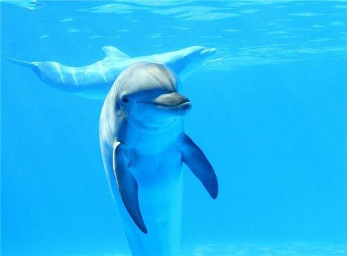 Индия предоставила дельфинам статус личности